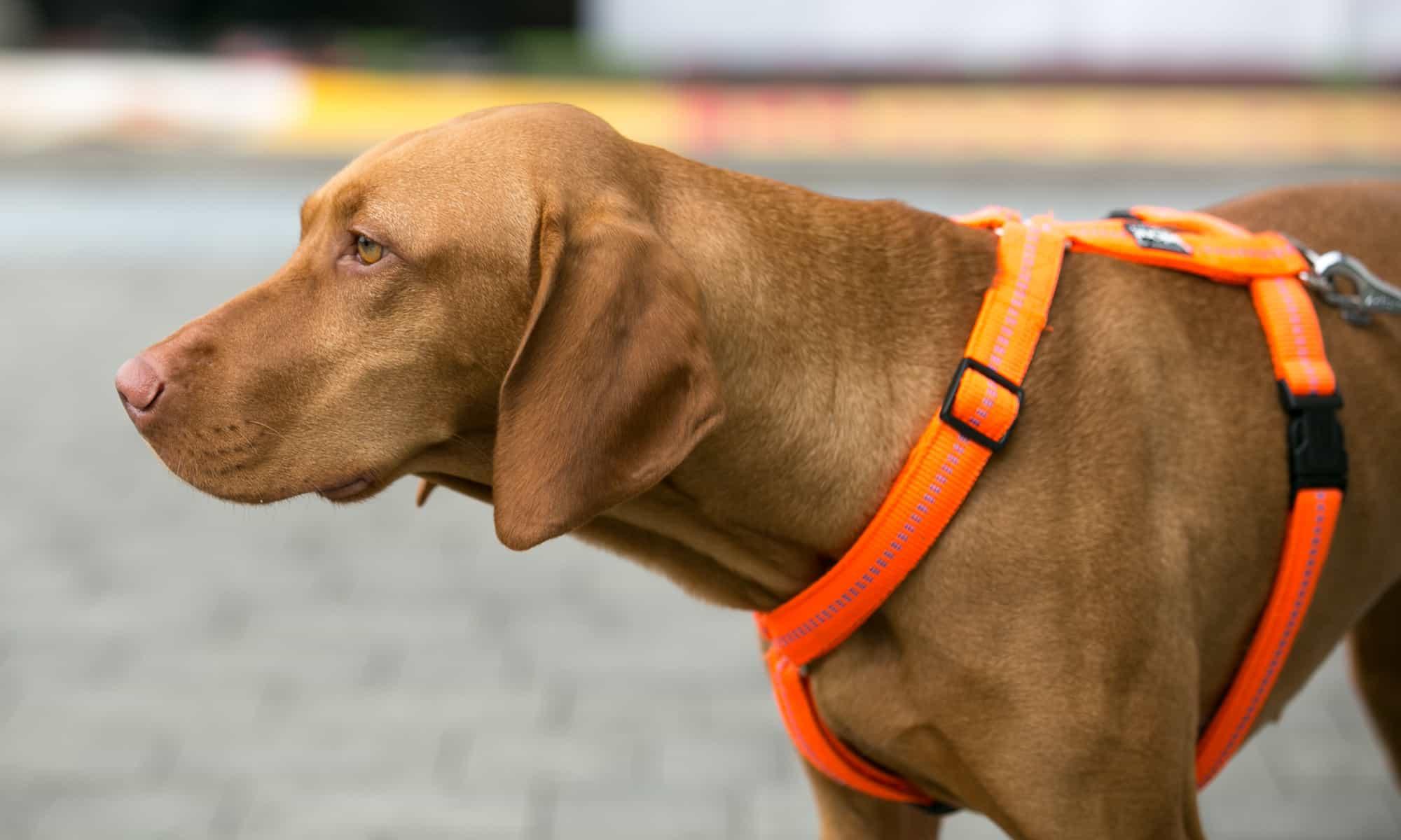 Hundegeschirr Hund