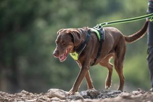 Hundegeschirr IDC Longwalk
